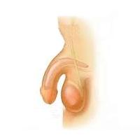 Импотенция: симптоматика, признаки и классификация, диагностика и лечение импотенции и эректильной дисфункции у мужчин