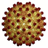 Все, что нужно знать о гепатите