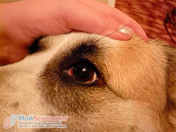 Можно ли заразиться хламидиозом от животных?