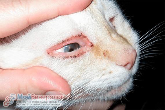 Можно ли заразиться хламидиозом от кошки?