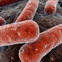 Генитальный туберкулез: химиотерапия и опасные последствия